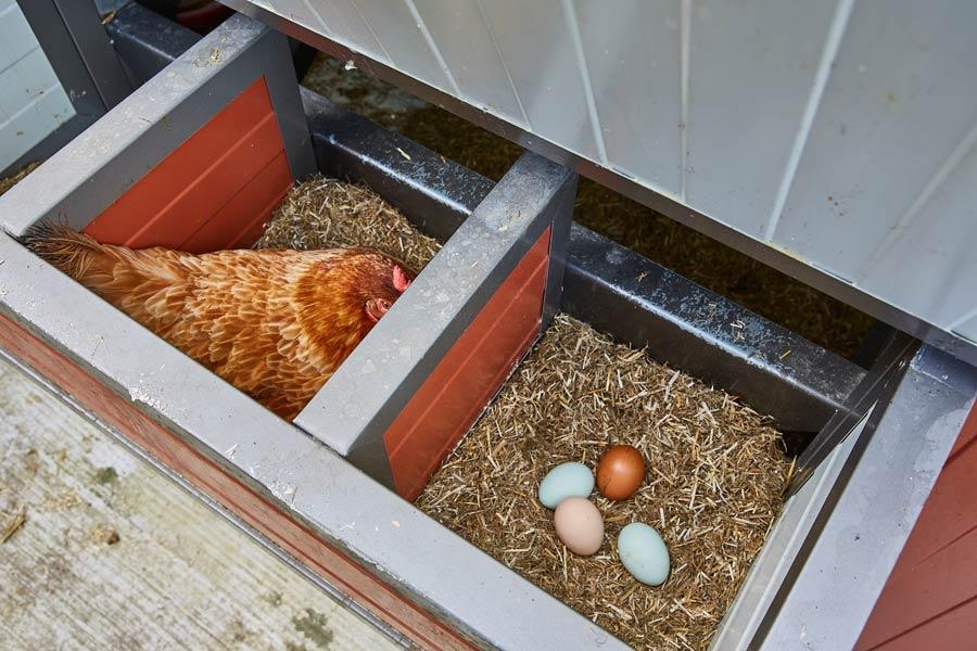 Dorotheas Bed & Breakfast - Foto: © Achim Banck / banckstudios